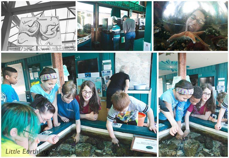 Enjoy a fun staycation in Whatcom County. Bellingham Marine Center is a great place to visit with kids!