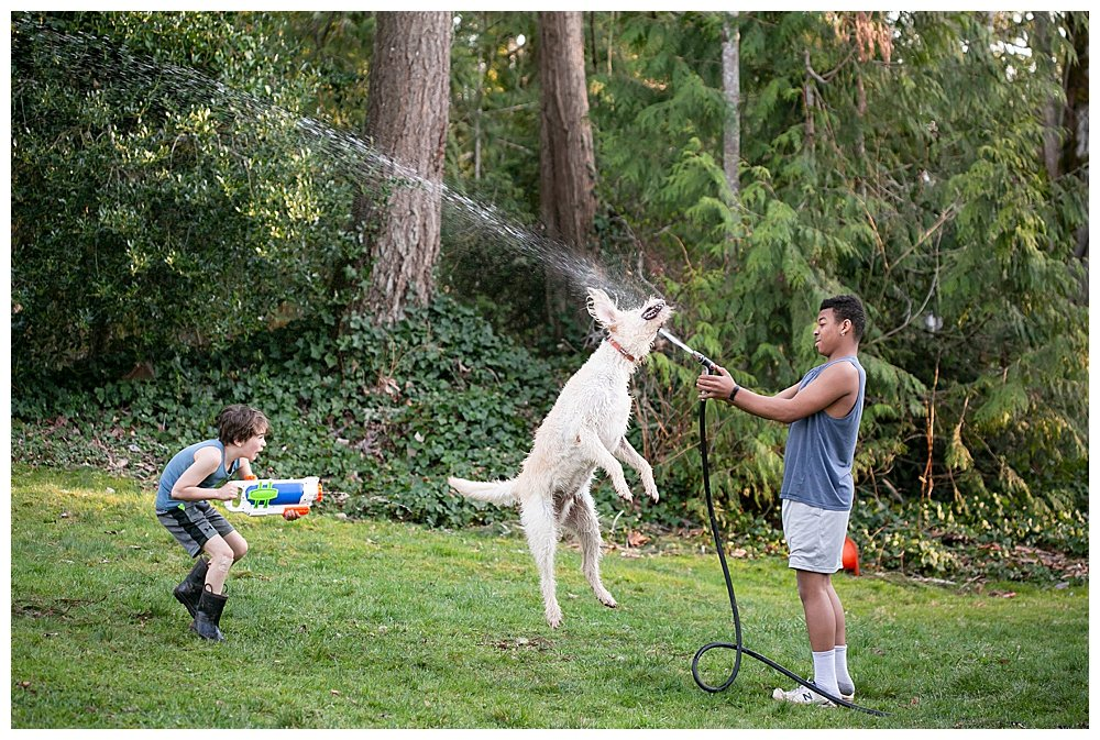Frodo the labradoodle being sprayed with the hose.