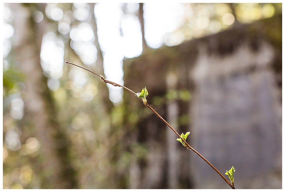 Tree buds are sprouting in March.