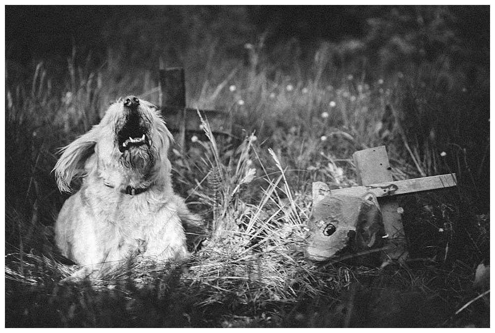 Dog in the Pet Sematary.